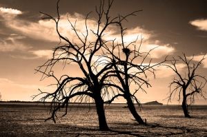 tree barren