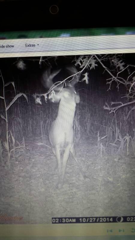 Doe_predator.jpg